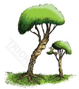 treesandabird-SHOT-COLOR