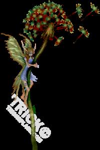 dandelion_faery_warpaint-SHOT-COLORONLY